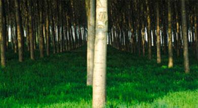 La madera que comercializamos proviene de bosques certificados.